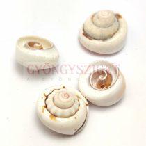 Kagyló - fúrt - 12-22 x 7-13 mm
