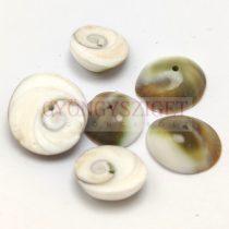Kagyló - fúrt - 11-15 x 4-5 mm